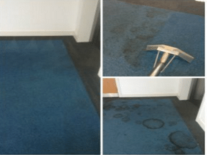 Office Carpet Cleaning by NuLife
